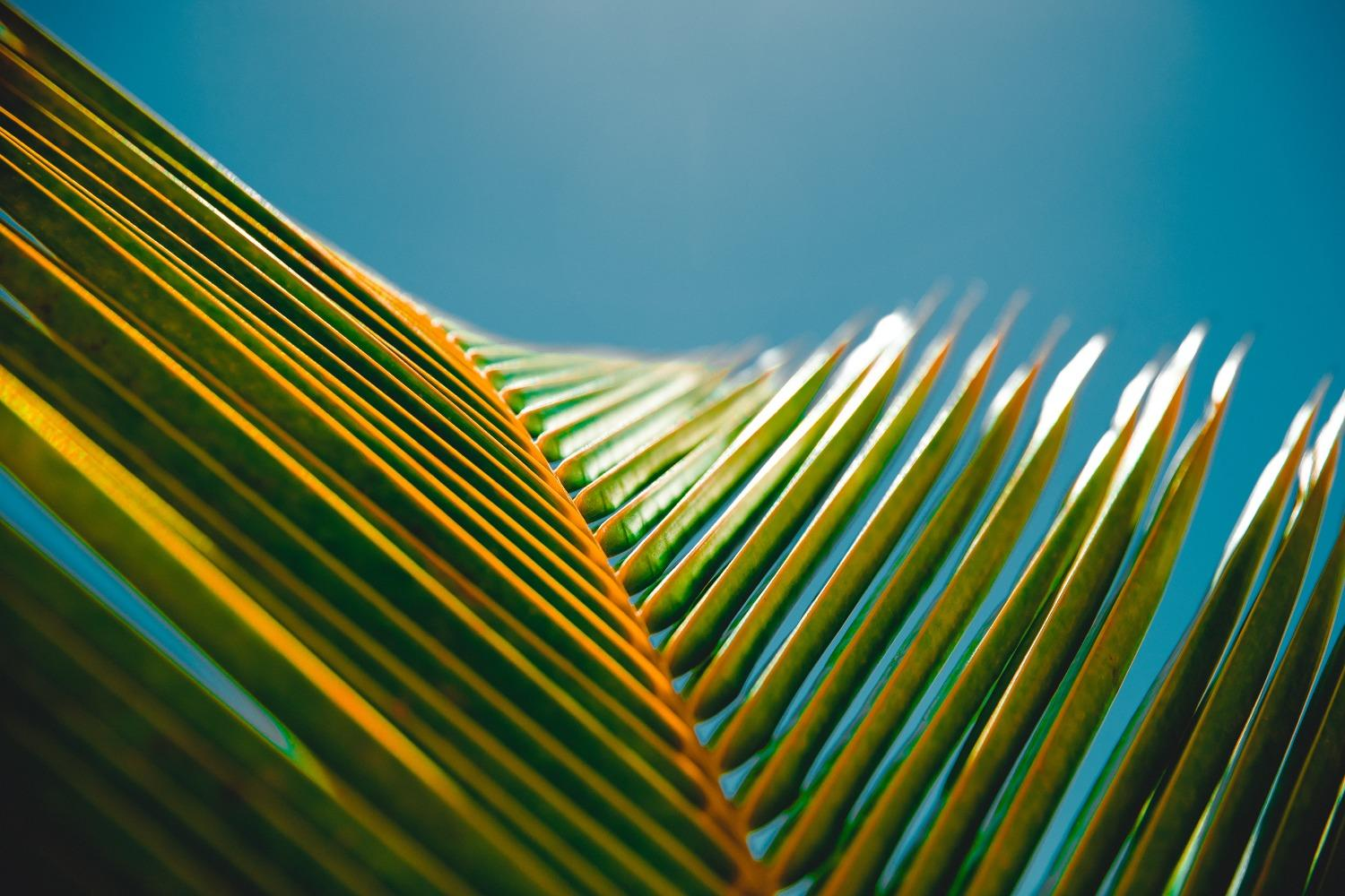 Close-up of a palm branch