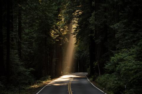Light Shining on a Dark Road